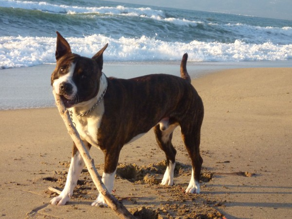 Iron-the-dog-beach-2