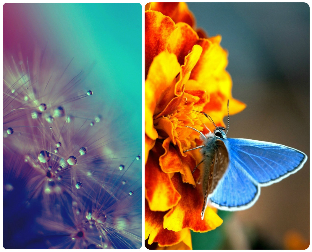Simple Wallpaper Butterfly Spring - spring-wallpaper-iphone-butterfly-colors  HD_212276.jpg